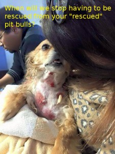 little-dog-soup-pit-bull-victim